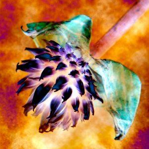 Golden chive flower photo art