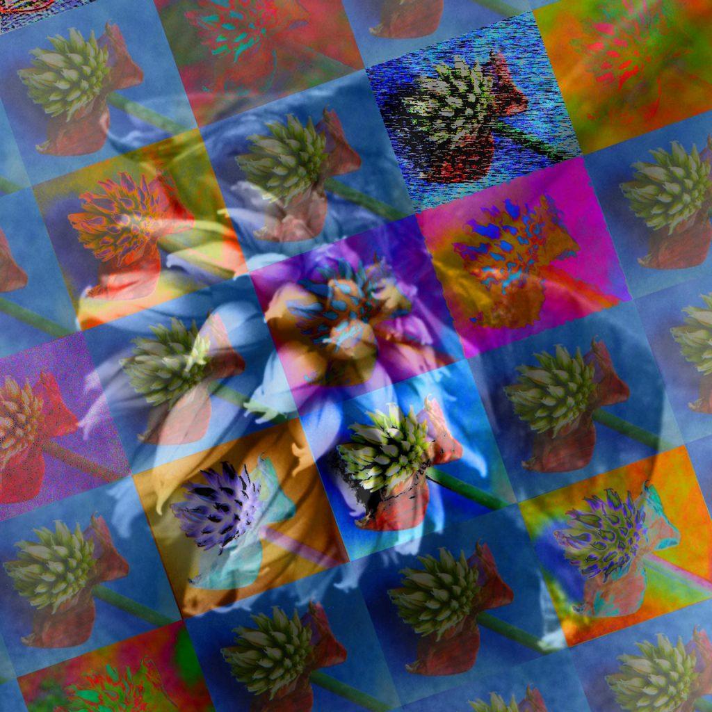Blue chive flowers photo art