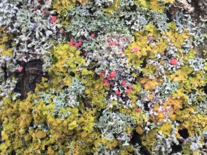 Lichens photograph - textures and art in nature