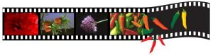 Peppers film strip graphic and photo montage